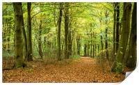 Forest Walk, Print