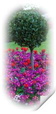 Round Bush & Spring Flowers , Print