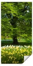 Daffodils & Narcissus under Tree, Print