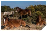 New Forest Ponies, Print