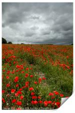 Poppies before the Storm, Print