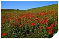Poppies by Nature, Print