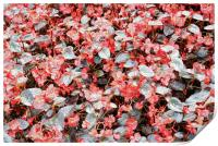 She Wore Red Flowers, Print