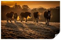 Clydesdale Sunrise, Print