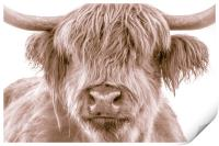 Hairy Coo Collection 2 of 7, Print