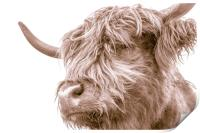 Hairy Coo Collection 7 of 7, Print