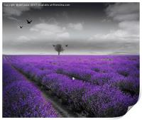 Lavender Fields, Print
