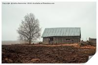 Birch Tree And Barn House On A Rainy Spring Day, Print