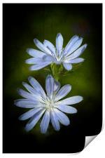 Wild Flowers, Print