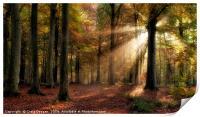 Autumn Forest, Print