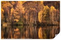 Autumn Birch, Print