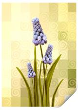 Grape hyacinths , Print