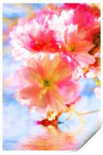 Cherry blossoms on the water , Print
