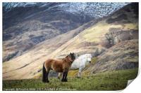 Corran Mountain Horses, Print