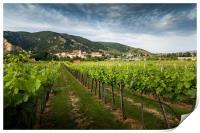View of Durnstein through vineyards in summer even, Print
