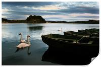 Swans on a Lake, Print
