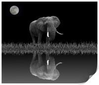 Elephant By Moonlight, Print