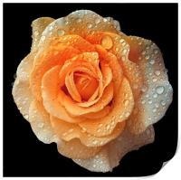Rain drops on roses, Print