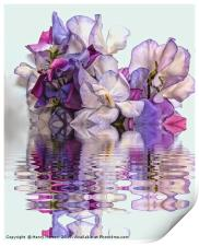 Floral reflections, Print