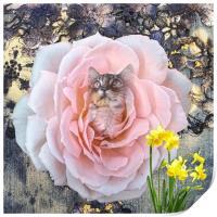 Kitten, Print