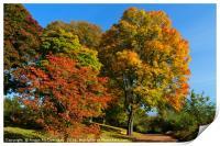 A walk into autumn, Print