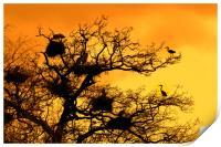 Heronry at Sunset, Print