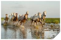 Mares and Foals in the Marshes, Print