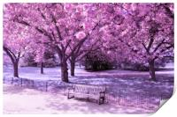 Under the blossom trees - Infrared, Print