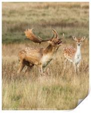 A word my deer, Print
