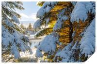 Winter Wonderland Snowscape , Print