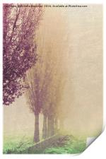 field in the fog, Print