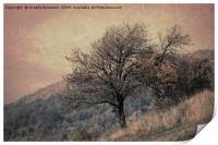 tree on mountain in the autumn mist, Print