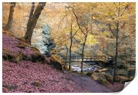 autumn woodland with river and bridge in Hardcastl, Print