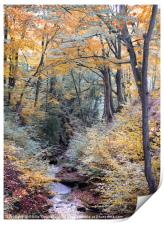 autumn woodland in beautiful seasonal colors with , Print