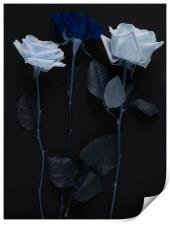Blue rose bouquet, Print