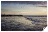 Seagulls feeding as sunset, Print