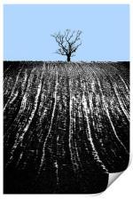 single tree in field, Print