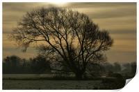 Winter tree silhouette, Print