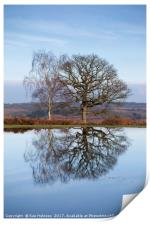 Winter Trees, New Forest, Print
