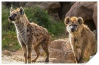 Pair of Spotted Hyena, Print
