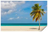 Palm tree alone on the white sand of the Eagle Bea, Print