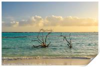 Dried branches emerge from the Carribean sea of Ar, Print