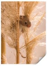 Harvest Mouse on Grass, Print