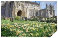 Daffodils at St Margaret  Cley next the Sea, Print