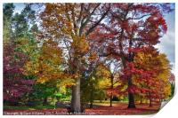 Autumnal colours in Virginia Water Lake     , Print