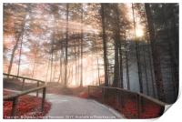 Forest road enlightened by autumn sunshine, Print