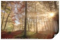 Sun rays through a misty autumn forest, Print