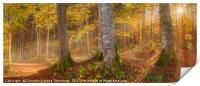 Sunshine through autumn forest, Print