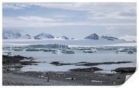 Gentoo penguins at Brown Bluff, Antarctica, Print