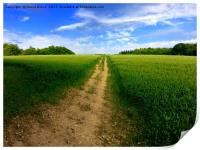 Summer in the Chilterns, Print
